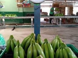 Банан Cavendish оптом из Эквадора - фото 2