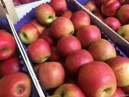 Польское яблоко от производителя La-Sad - фото 2
