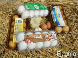 Transparent packaging for berries, fruits, meat, eggs, mush.