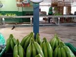 Банан Cavendish оптом из Эквадора - photo 2