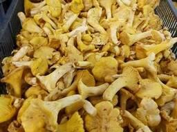Свежие грибы / Свежие ягоды - photo 2