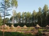 Участок на видземском каменистом взморье под поселок - photo 6